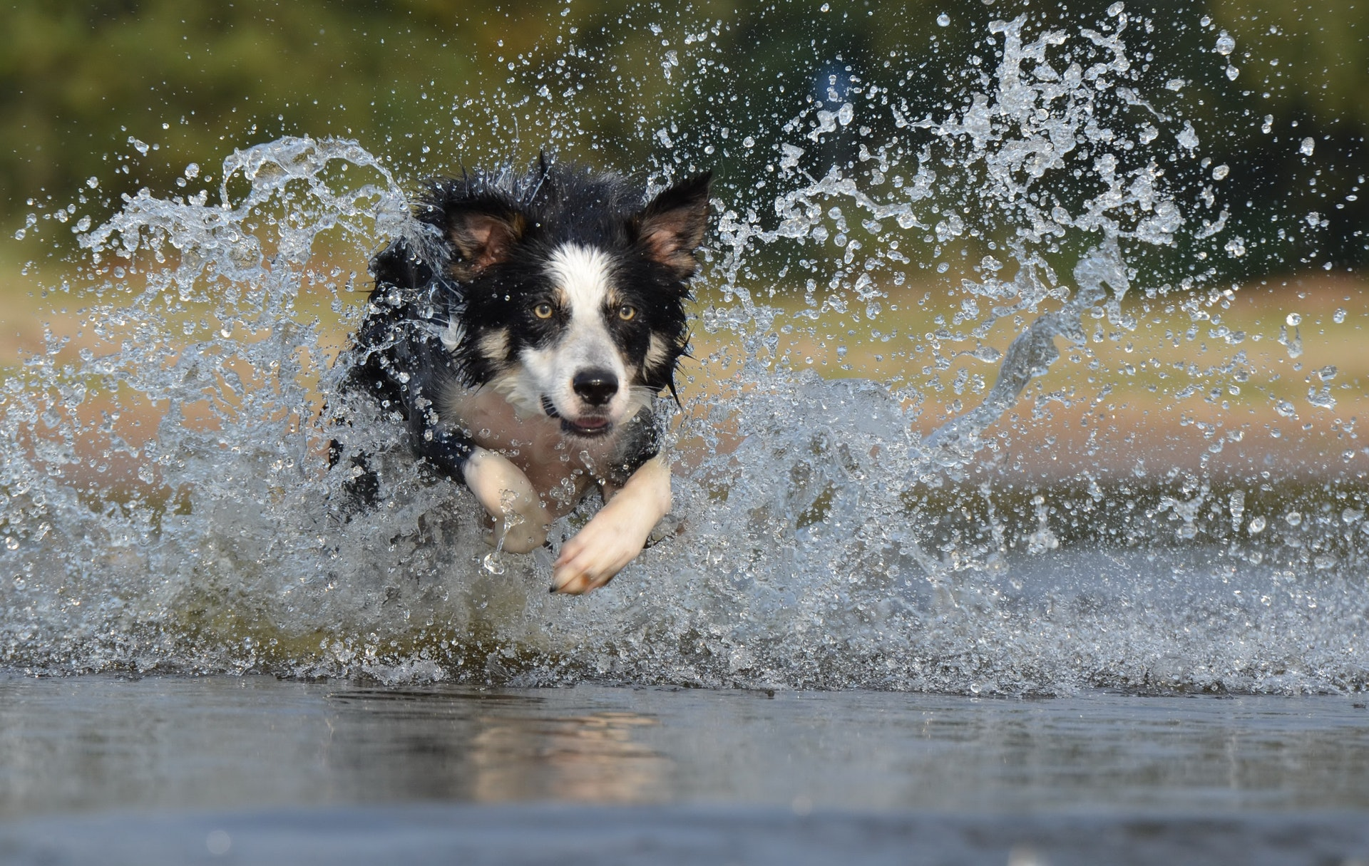 Top 10 Breeds for Active People