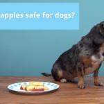 Dog Eat Apple