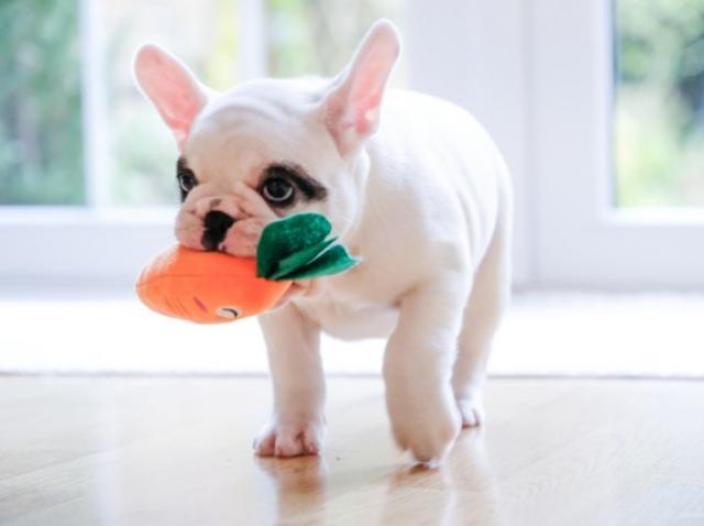 5 DIY Dog Toys