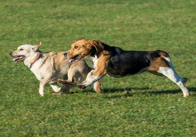 How To Deal With Bullies At The Dog Park; The Dogs And Their Humans