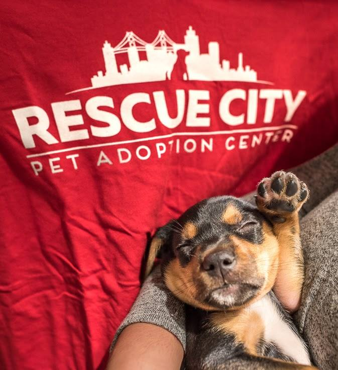 6 Steps To Bring A Rescue Dog Home
