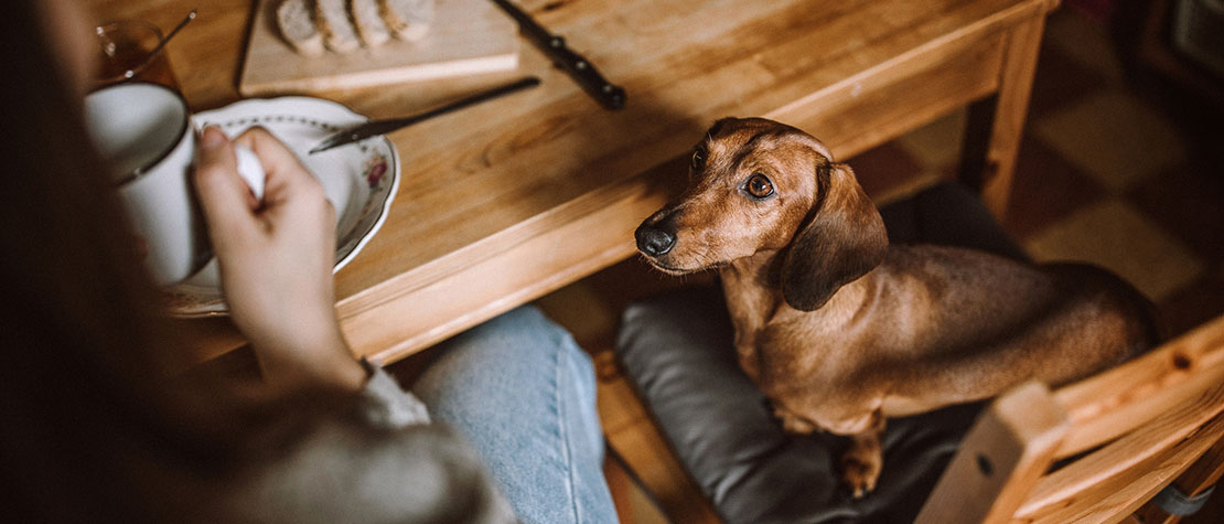3 Ways You're Comforting Your Dog That Teaches Them Bad Habits