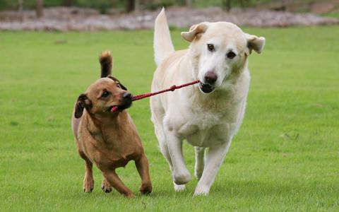 How To Introduce A New Dog Into An Existing Pack