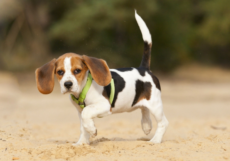 8 Reasons Your Dog May Be Limping