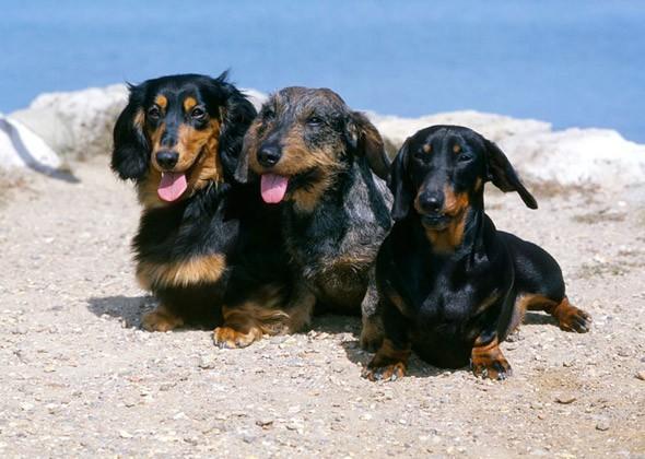 The 10 Smartest Dog Breeds