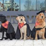 Puppy University Program