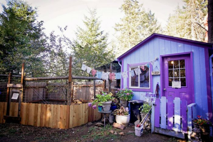 Pit Bulls Waiting To Be Adopted Get Tiny Cottage Sanctuaries