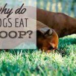 Dogs Eat Poop