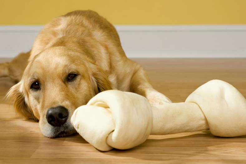 Is Rawhide Actually Safe For Your Dog?
