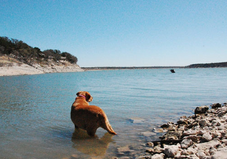6 Spring Activities That Your Dog Will Absolutely Love