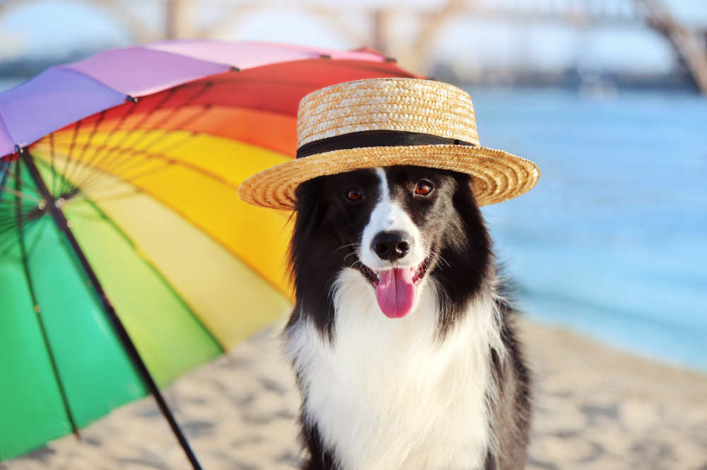 Safe Summer Exercise Tips for Your Dog