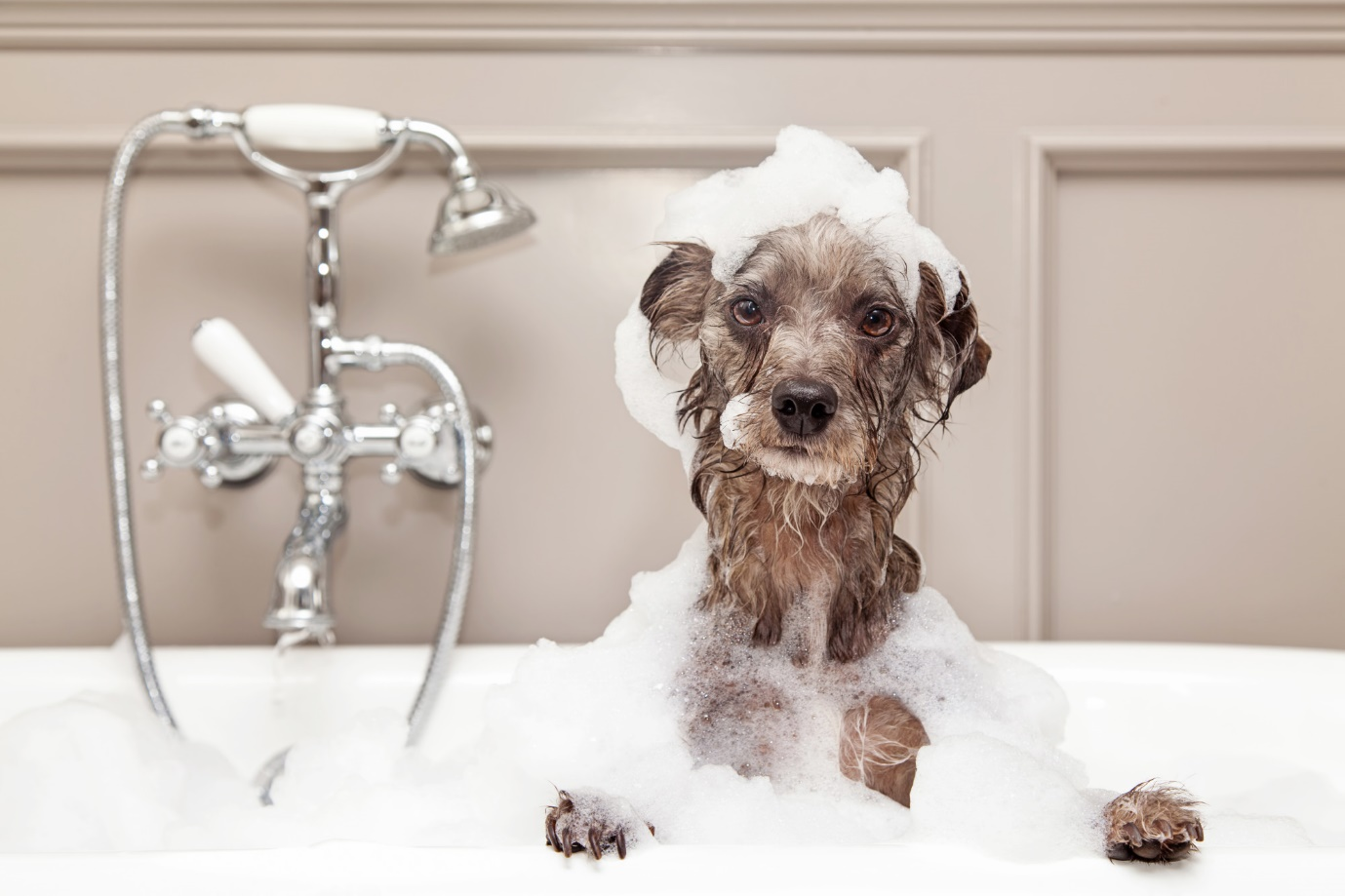 Keep Your Dog Smelling Fresh: 3 Tips on How to Bathe Your Dog