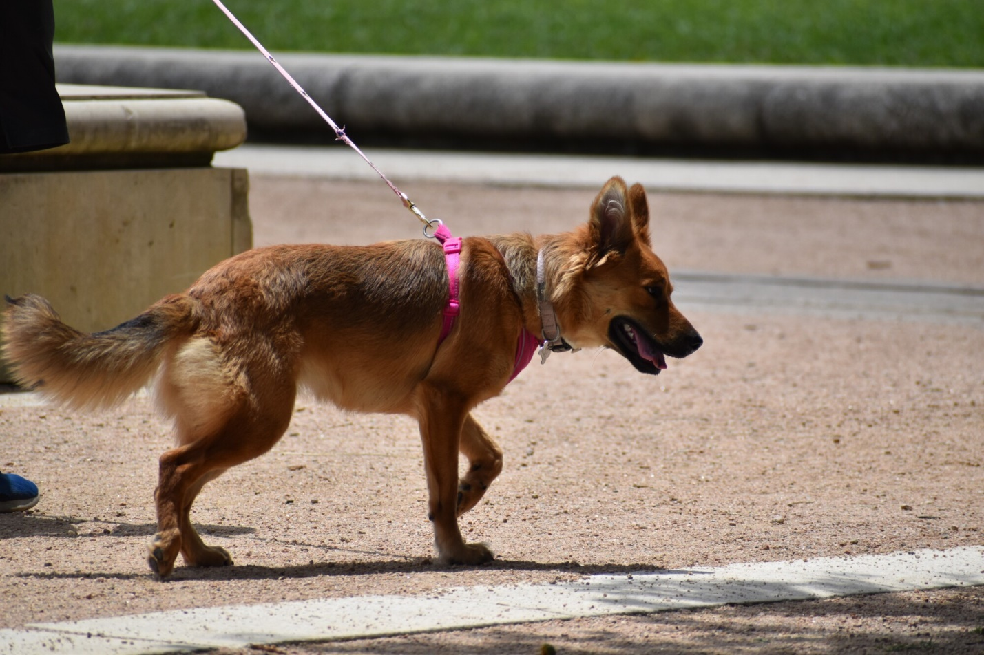 A Nose for Narcotics: The Low Down on How Sniffer Dogs Are Trained