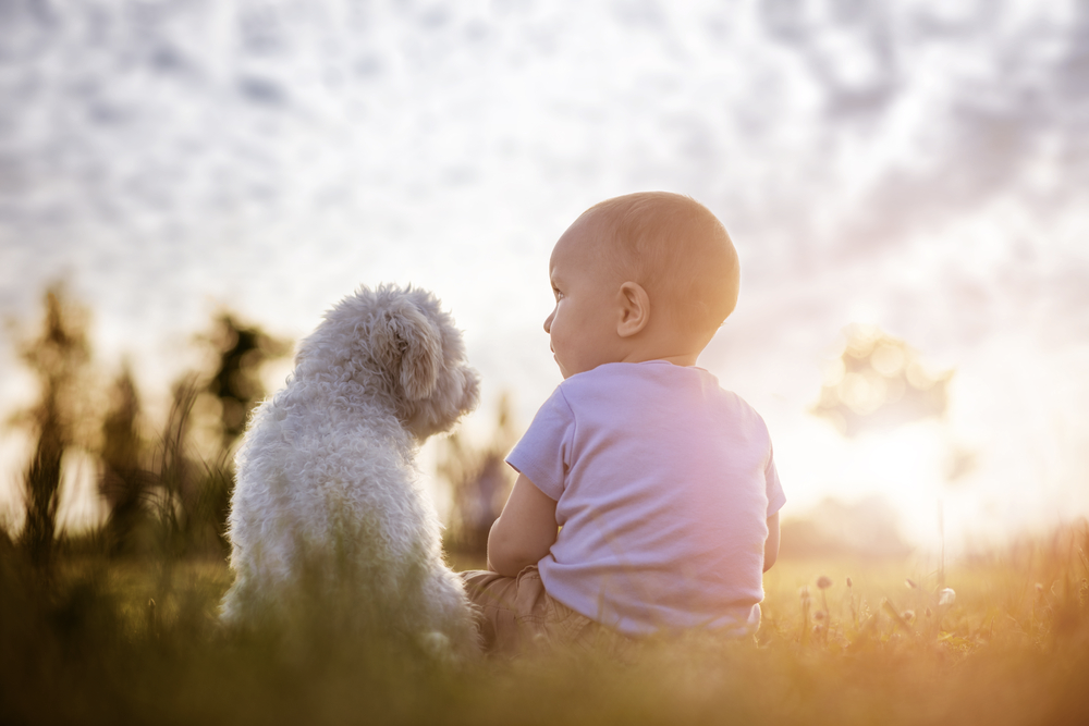 How to Train Your Energetic Dog to Be Gentle Around Your Newborn